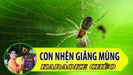 Hát Karaoke Con nhện giăng mùng