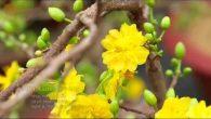 Vội vàng mùa xuân